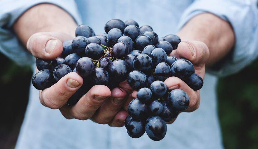 Croatian winemakers attending Wine Paris exhibition