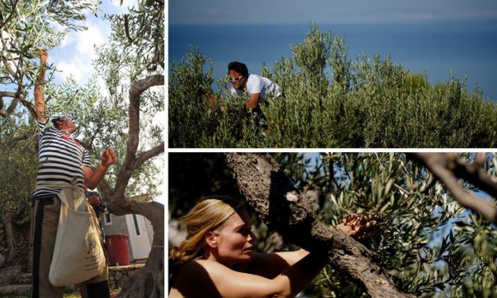 World olive harvesting championship in Postira wins creative tourism award in Spain