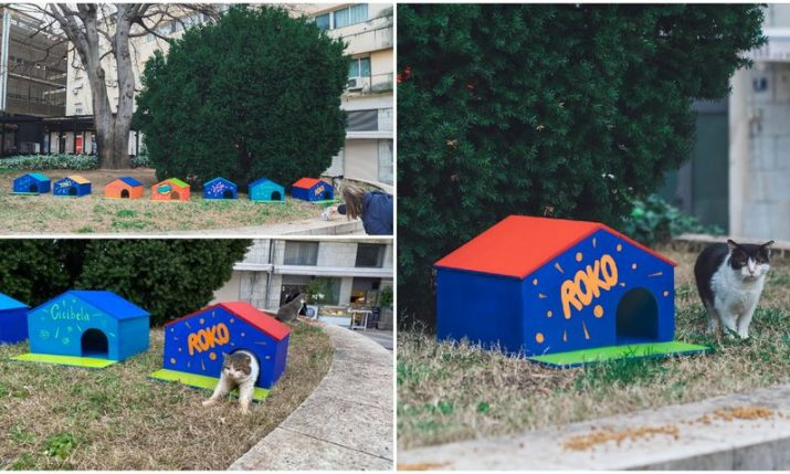 Split's favourite cats get houses thanks to theatre workers