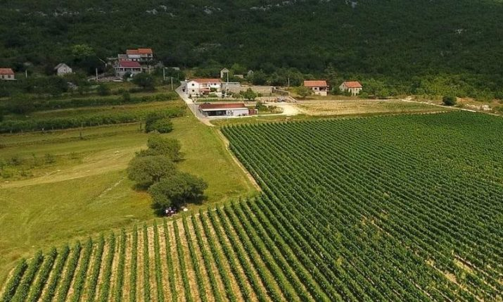 Croatian winemakers at the largest wine fair in North America
