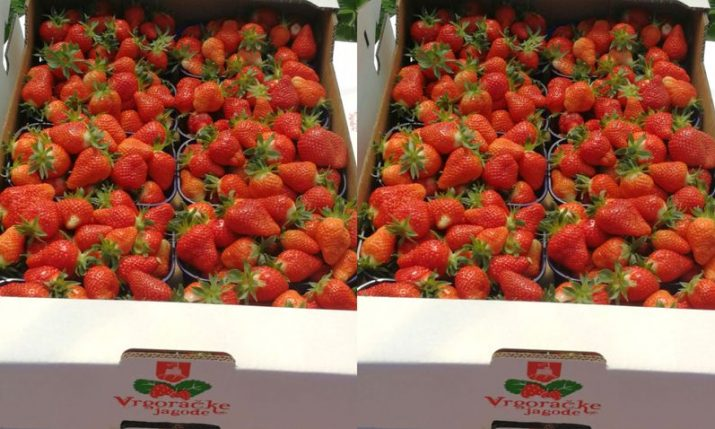Strawberries from Vrgorac hit Croatian farmers' markets