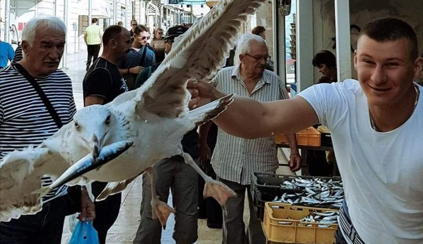 VIDEO: Split Seagull caught in the act