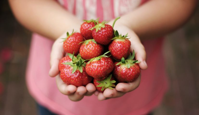 What makes strawberries from Vrgorac so good
