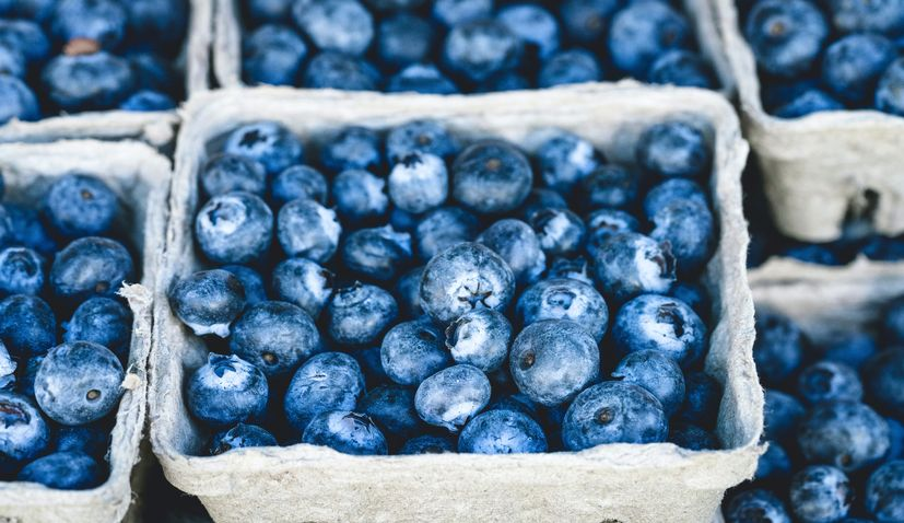 Zagreb's Distribution Centre  invests in berry-sorting machine