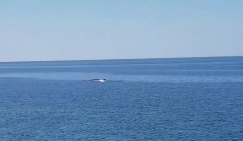 VIDEO: Fin whale, the second-largest species on Earth, spotted in Dalmatia