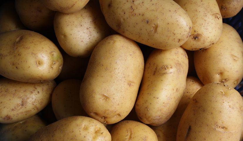 Croatia sees major increase in potato imports