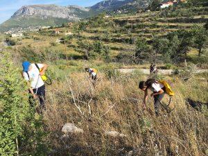 afforestation Dalmatia
