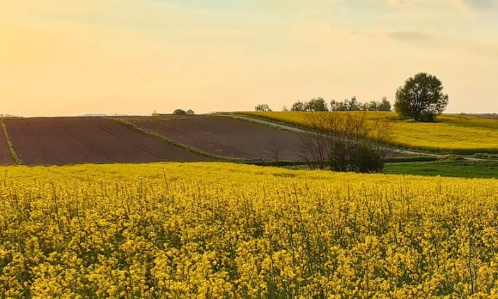 Average prices of arable land, meadows and pastureland in Croatia increase