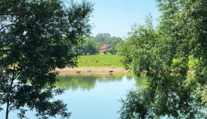 Lonjsko Polje Nature Park Croatia