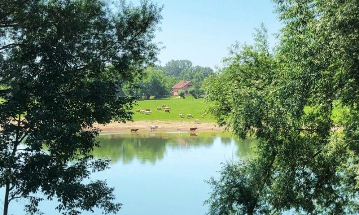 Protected Croatian wetlands helping preserve fresh water sources and eco systems