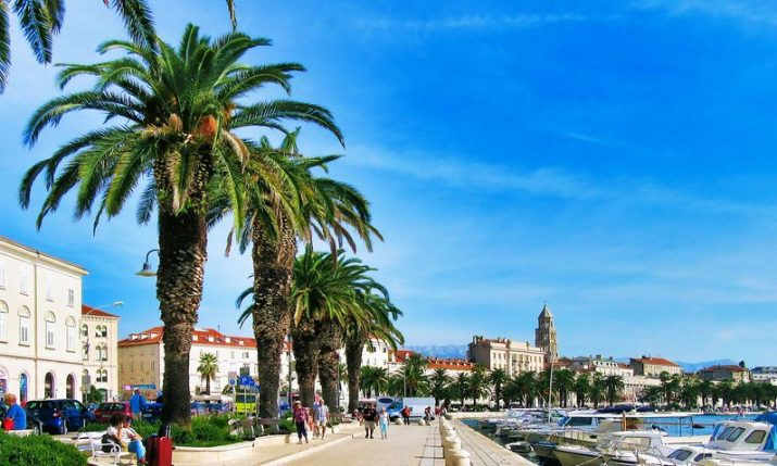 First palm tree on Split waterfront planted exactly 100 years ago