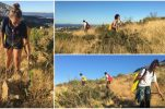 Afforestation around Split: Volunteers cover 500,000m2 to water thousands of seedlings