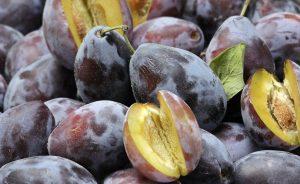 Croatian plum production