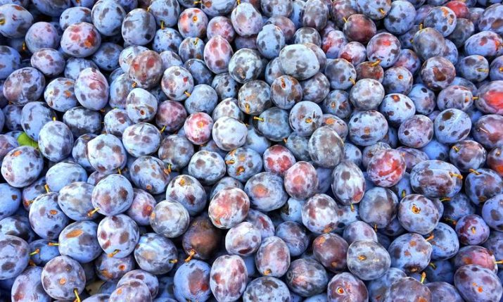 Croatia's plum production falling, imports rising