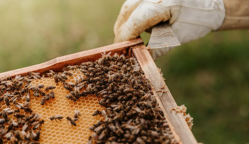 Beekeepers from Herzegovina to start producing bee venom for breast cancer treatment