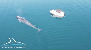 Whales in Croatia