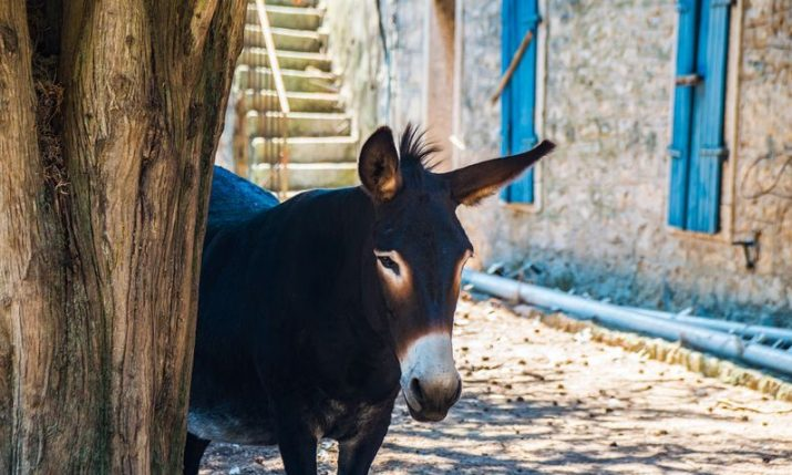 Rural tourism in Croatia: 'Great potential and opportunity'