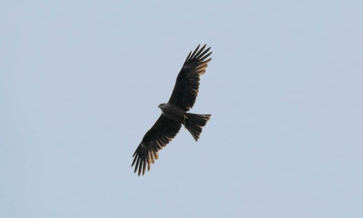 89 young griffon vultures on Croatia's Kvarner archipelago grow feathers