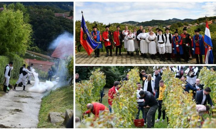 Grape harvest in Croatia: Traditional feast held in Pregrada for 50th time