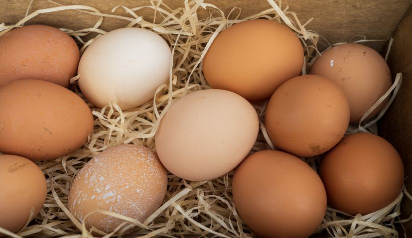 Agro-Klaster first in Croatia to receive GMO-FREE certificate for free-range eggs