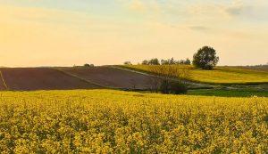 Croatian Agriculture