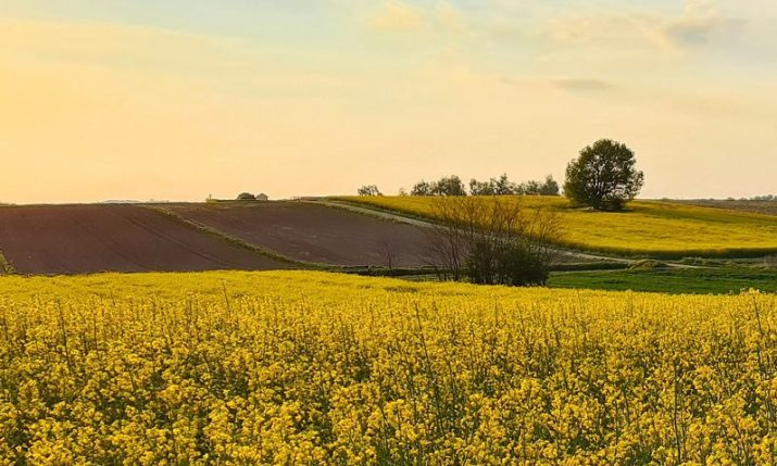Arable land prices in Croatia rise