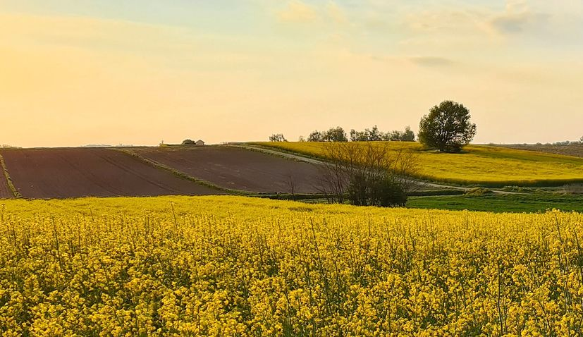 Agriculture and food production key to development and survival of eastern Croatia