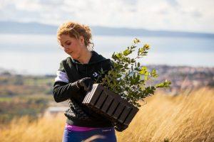 Boranka Croatia afforestation