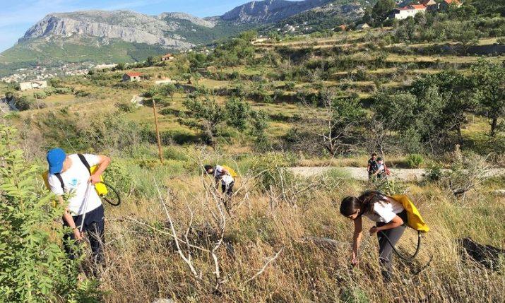 Afforestation in Dalmatia: Boranka announce new actions, free educational kits for schools