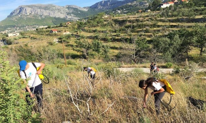 Afforestation in Dalmatia: Boranka announce new actions, free educational kits for schools