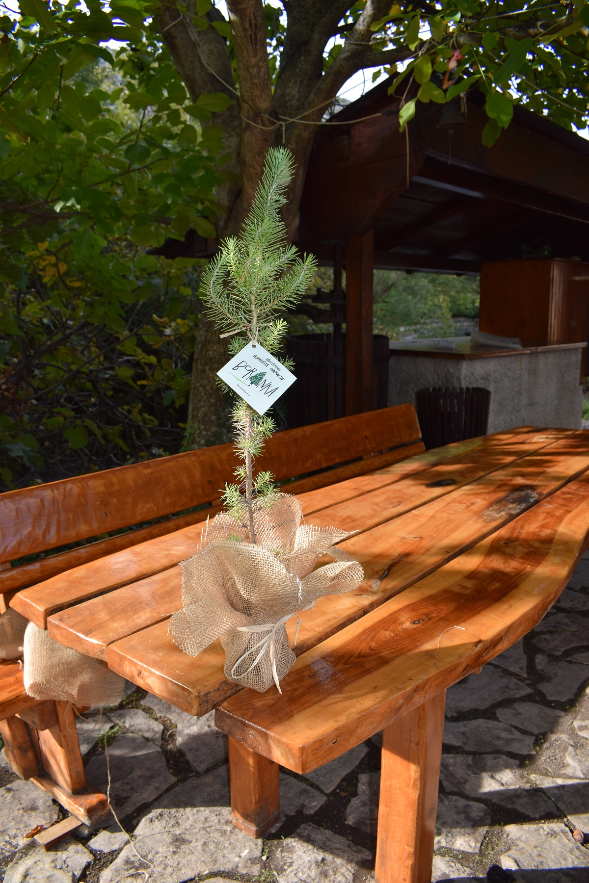afforestation actions in Dalmatia