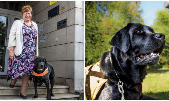 Croatian guide dog volunteer Mira Katalenić among EU Local Heroes