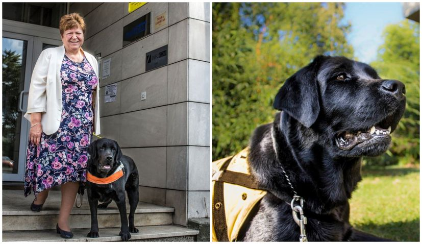 Croatian guide dog volunteer Mira Katalenić among EU Local Heroes