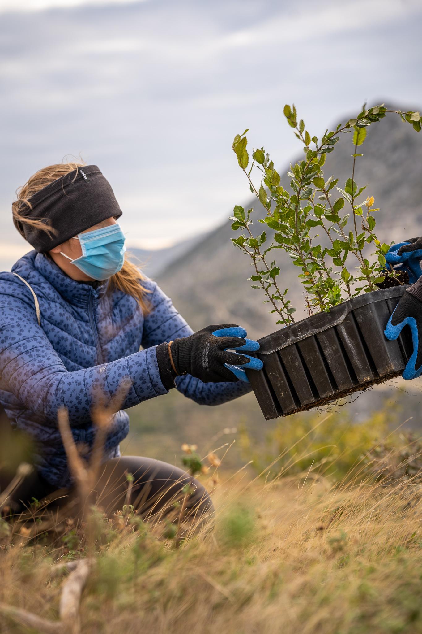 Boranka Dalmatia fires reforestation