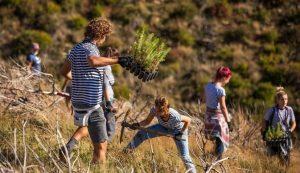 trees planted Boranka