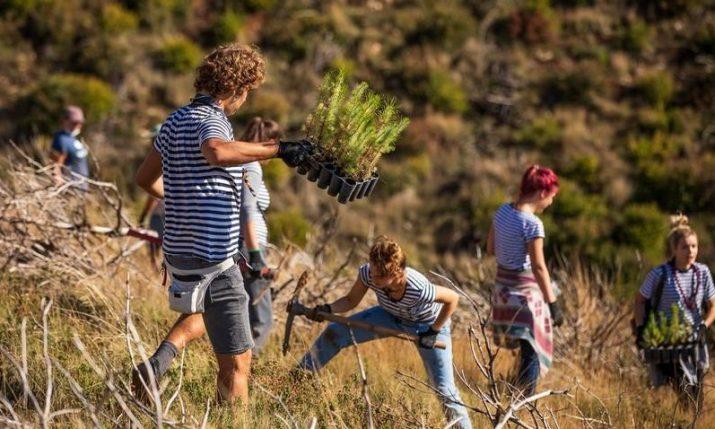 Volunteers plant 3,000 tree seedlings in wildfire-affected area in Dalmatia