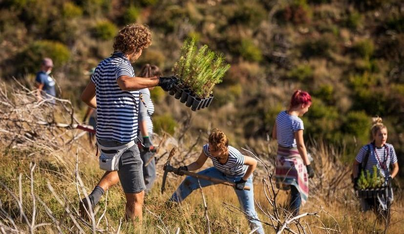 Volunteers plant 3,000 tree seedlings in wildfire-affected area in Dalmatia