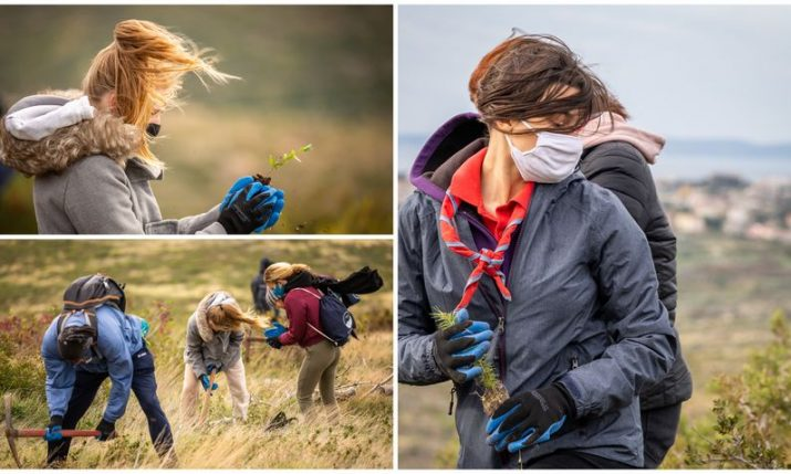 Strong bura wind doesn't stop final reforestation drive   in Dalmatia for 2020