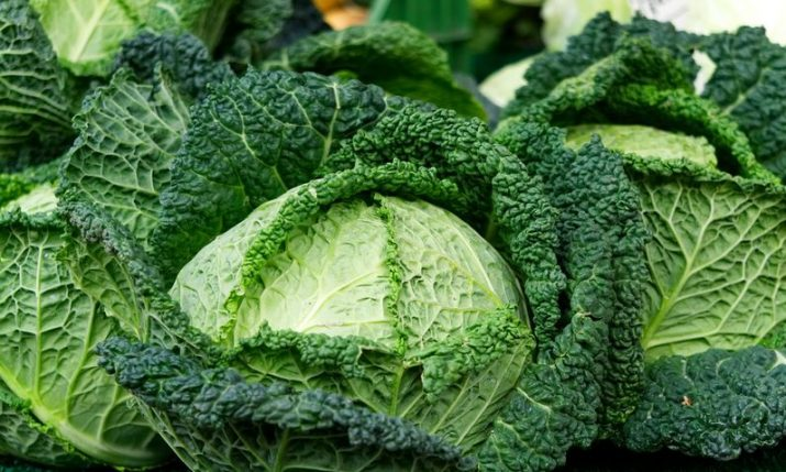 Cabbage production in Croatia stable, record-high exports