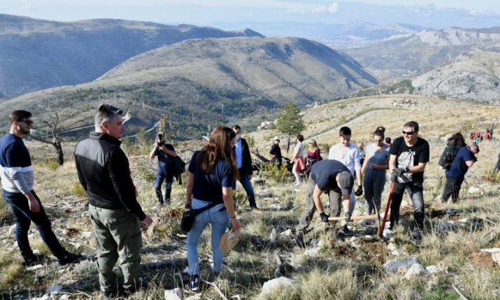 Reforestation of mountains overlooking Split continues