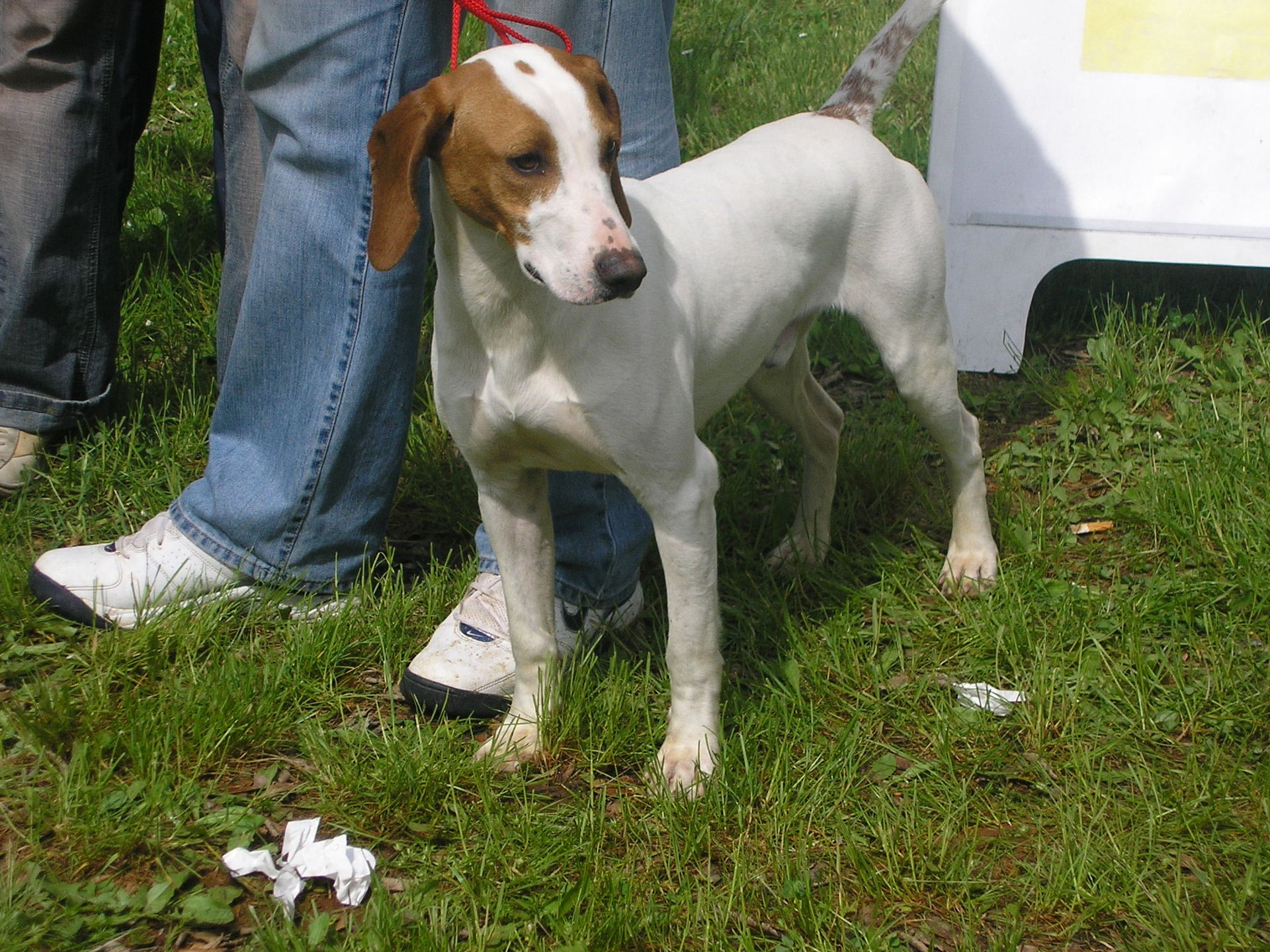 dog breeds in croatia