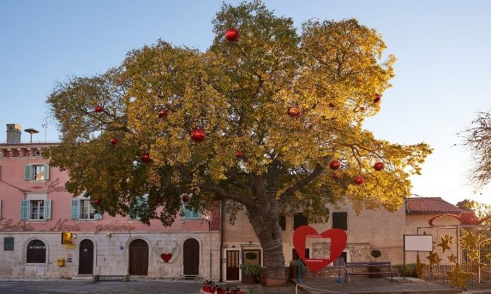 Croatia in running for European Tree of the Year 2021 title – place your vote