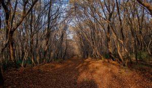 Pula boasts 12 marked hiking trails