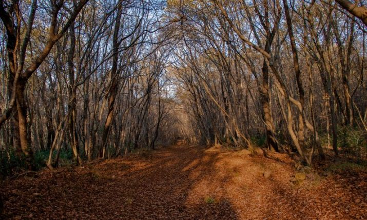 Hiking in Istria's biggest city: 12 marked trails in Pula