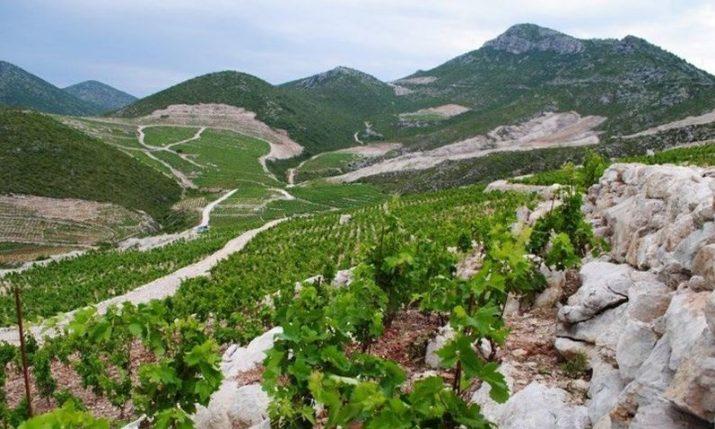 Ponikve wine-growing area in Croatia awarded protected designation of origin