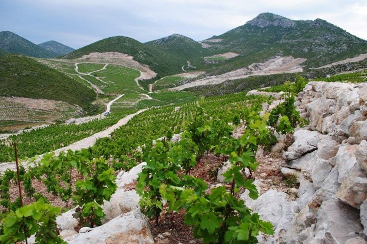 ponikve croatia wine growing region