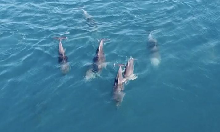 Cutest dolphins playing in Croatia's Adriatic capturedon video