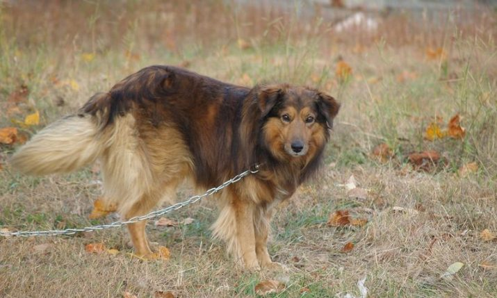 Over 40,000 Croatians sign petition against chaining dogs