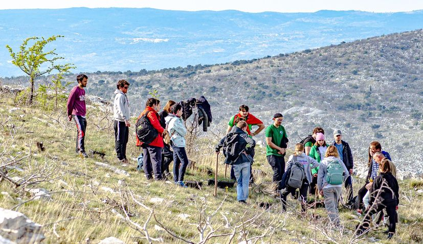 Scout association of Split plants 2,200 new trees