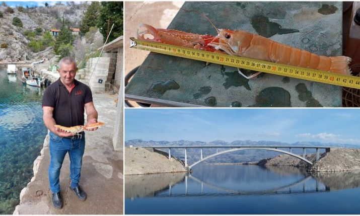 Croatian fisherman catches record-long scampi near Pag bridge